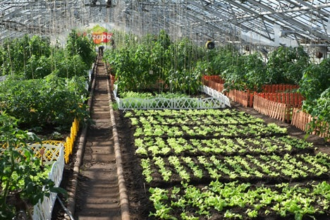 Eco-farming under glass