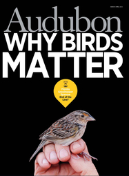 Cover of Audubon Magazine March 2013