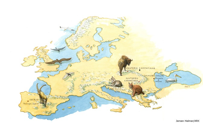 Rewilding Europe map