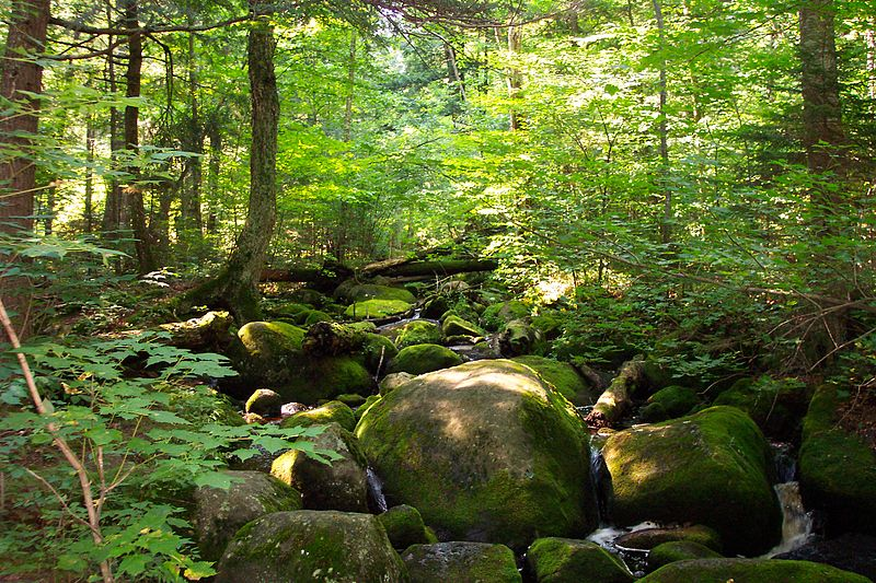 The Adirondacks are well documented in Eric Rutkow's Canopy. Photo courtesy of Wiki Commons