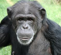 Pretty Pam. Courtesy of chimphaven.org