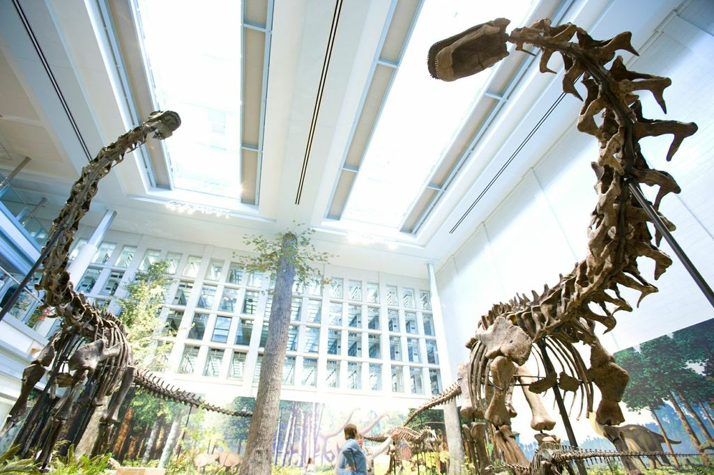 Two large, insulated skylights help with natural lighting in the Dinosaurs in Their Time exhibit.