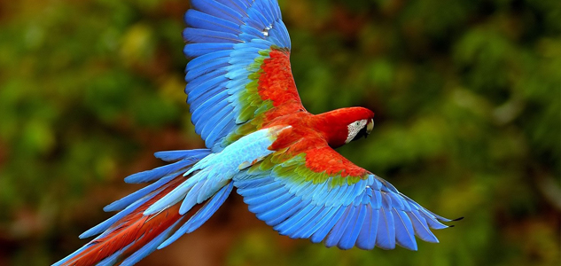 Macaw at the National Aviary is one of 150+ species, many of them rare and endangered.