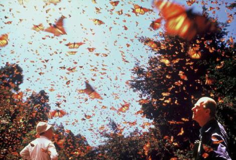 Réserve de biosphère du papillon monarque