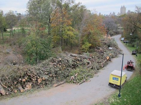Tree loss in historic Central Park - over 800 trees damaged and downed.