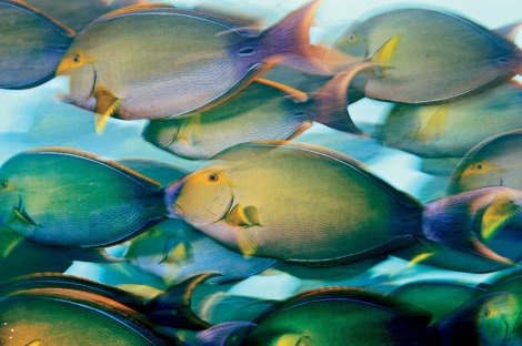 Brian Skerry Ocean Soul. All rights reserved.
