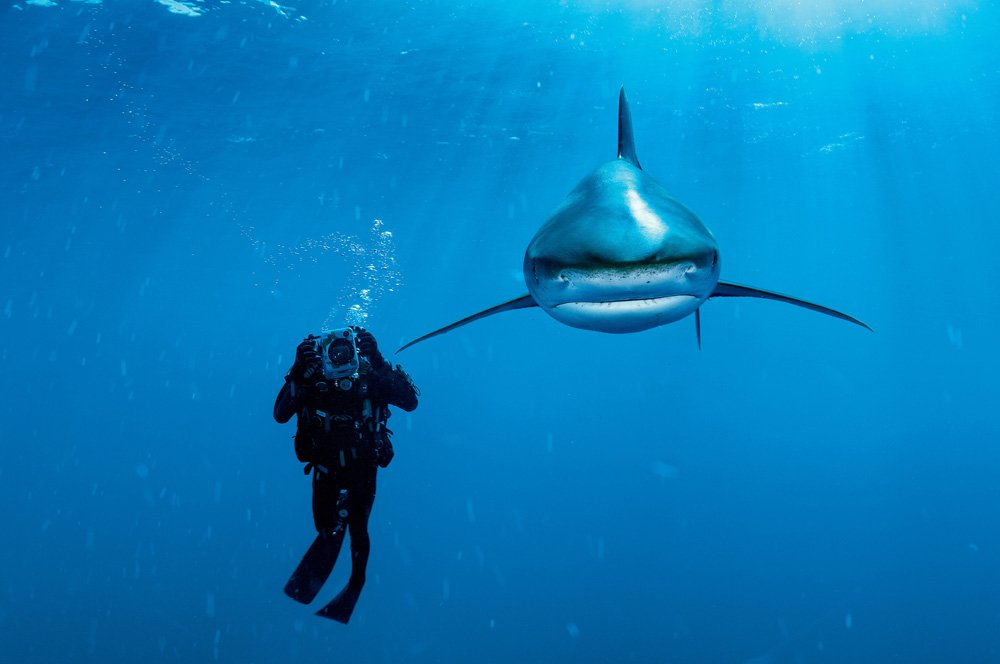 Oceanic whitetip shark and biologist. Photo by Brian Skerry, all rights reserved.