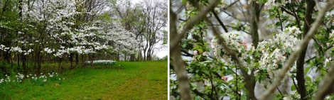 An 8-acre meadow features over 550 native white-flowering dogwood trees, now a rare collection due to ravages of disease over the past 25 years.
