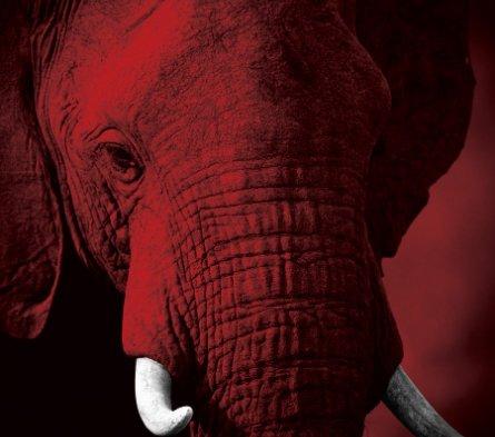 Elephant image. Courtesy of IFAW