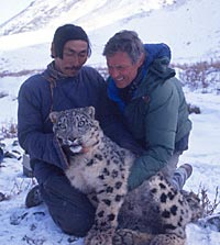 George Schaller with an anesthetized snow leopard