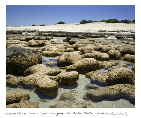 Stromatolites 2000-3000 years old Carbla Station West Australia Courtesy of Rachel Sussman