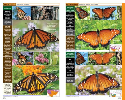 Swift Guide to North America's Butterflies