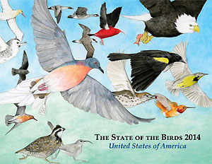State of the Birds Report 2014