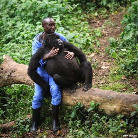 Andre Bauma who is mother and father to four orphan gorillas. Photo courtesy of Getty