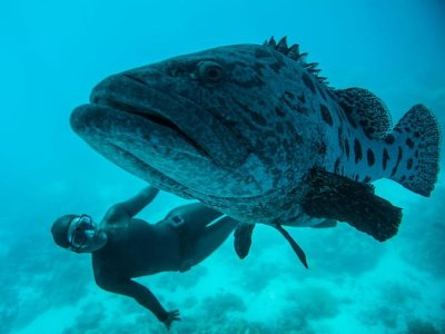 Free diving at the Great Barrier Reef