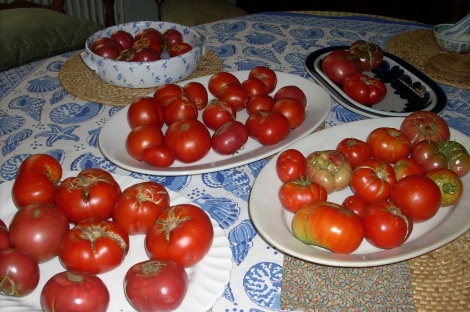 Summer Tomatoes (CC 3.0 Bobbie Faul-Zeitler)