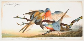 Passenger Pigeon painting by Walton Ford. Courtesy of the artist. The passenger pigeon went from billions to complete extinction in less than half a century.