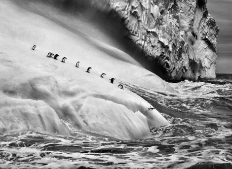 Chinstrap penguins on an iceberg, between+Zavodovski and Visoko islands ©Sebastiao Salgado
