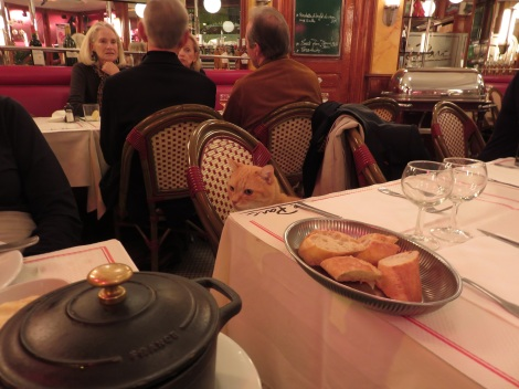 Cafe's house cat waits for some chicken from my pot au feu (Oct 2014) Bobbie Faul-Zeitler CC- 3.0