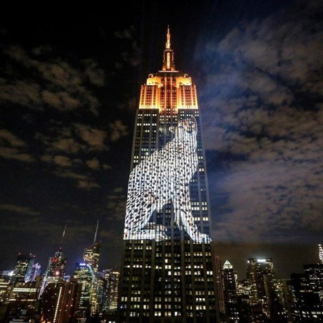 Racing Extinction event at the Empire State Building. Image by Joel Sartore (rights reserved)