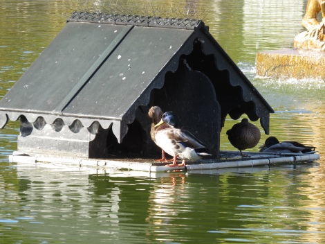 The Duckhouse at the Luxembourg Gardens (Oct 2014) Bobbie Faul-Zeitler CC - 3.0