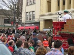 Thousands flocked to see America's favorite horses - the Budweiser Clydesdales, in the 2015 Christmas Parade in Media PA. (Bobbie Faul-Zeitler, CC 3.0)