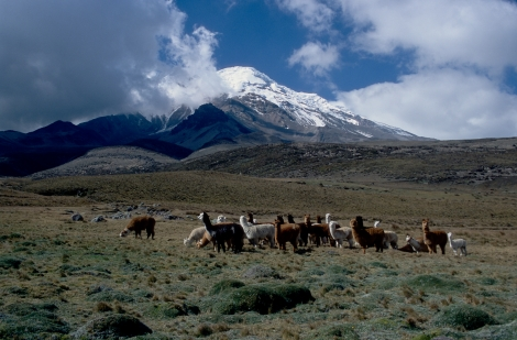 Mount Chimborazo. Courtesy of wikipedia