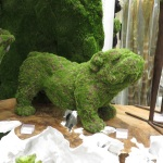 Festive French bulldog in moss! He's a Parisian pooch. (Bobbie Faul-Zeitler, CC 3.0)