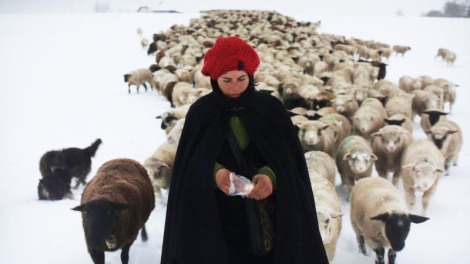 Shepherdess Carole with 800 sheep in Winter Nomads 2012