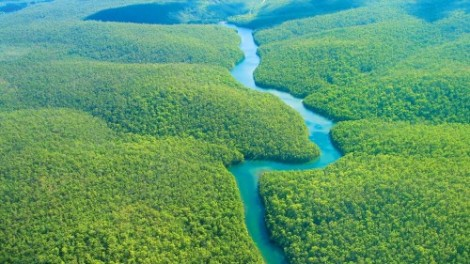 Amazon Rainforest Courtesy of foundtheworld