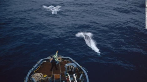Harpooning minke whales. Photo by Mark Votierz Hulton/Getty Image Archives. All rights reserved