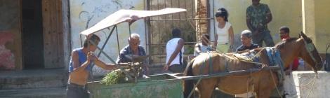Horsedrawn huckster selling vegetables in Trinidad