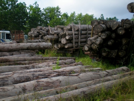 Illegally logged wood from Indonesia Courtesy US Forest Service