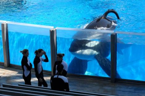 Tilikum Photo by Phelan M. Ebenhack AP