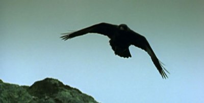 General shot of raven in flight Courtesy of PBS