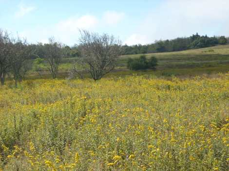 Big Meadows at Shenandoah National Park, where hundreds of years ago, native Americans hunted for buffalo