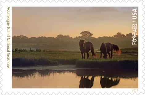 The ponies at Assateague Island, transformed here into a postage stamp