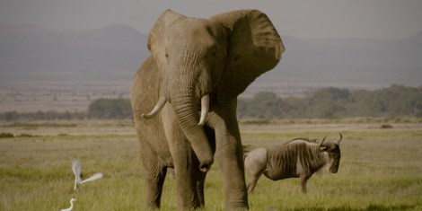 Still photo from the new documentary The Ivory Game (2016)