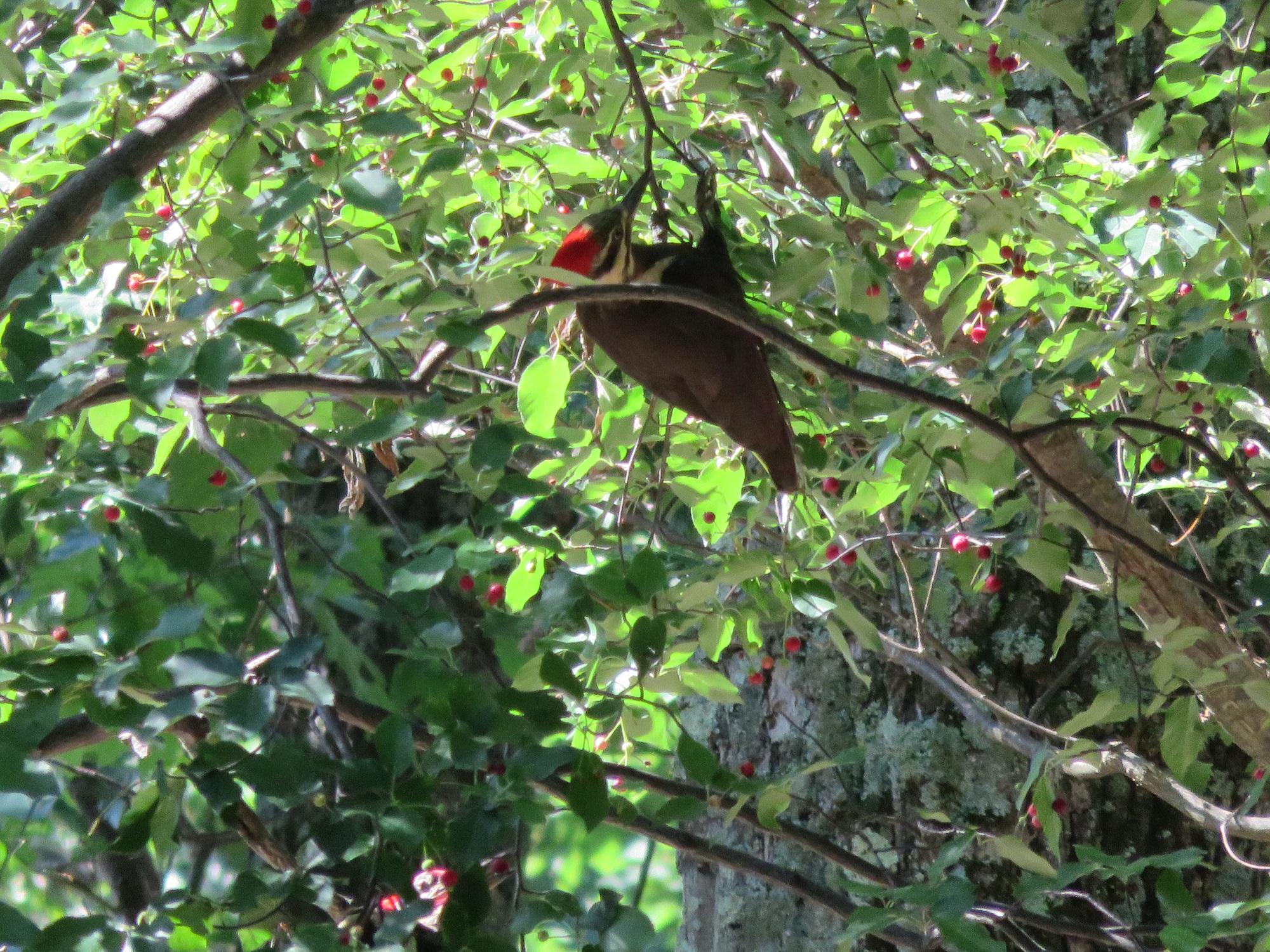great backyard bird count feb 17 20 green news update