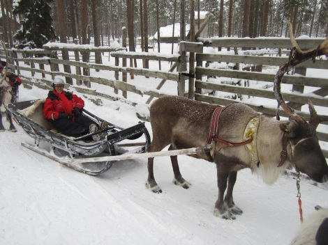 At the reindeer farm, operated by a Finn! Photo by Aik Meeuse, Creative Commons 3.0