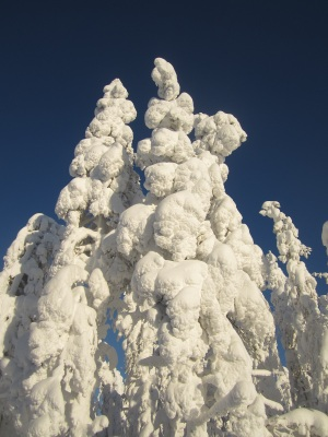 Yes, these are trees in the snowbound landscape. Aik Meeuse, Creative Commons 3.0