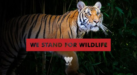 We stand for wildlife! (Wildlife Conservation Society)
