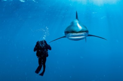 Oceanic whitetip with Brian Skerry. Courtesy Brian Skerry.