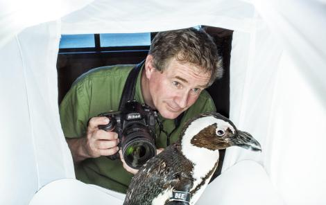 Joel Sartore with African Penguins at the Monterey Bay Aquarium. Photo by Ann Truitt