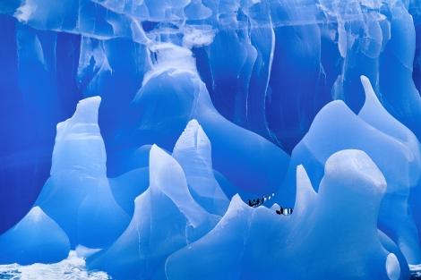 Blue Iceberg. Copyright Frans Lanting. lanting.com