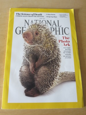 Brazilian porcupine was on the cover of the April 2016 issue, and Geo created 10 more for readers to select. Copyright Joel Sartore/National Geographic Photo Ark.