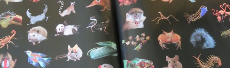 """Photo spread in National Geographic (April 2016) shows a fraction of the thousands of species that have """"sat"""" for portraits in the Photo Ark."""