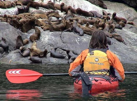 Kayaking at Pumalin includes the chance to see the wildlife. Courtesy of Pumalin National Park