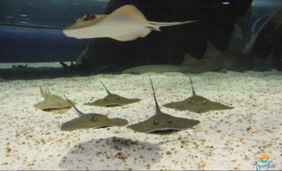 Rays in the Aqua Rio tunnel