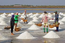 Sea salt being harvested. Courtesy of Wikipedia